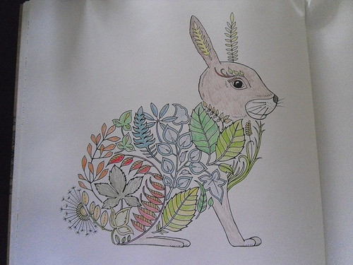 First picture Rabbit